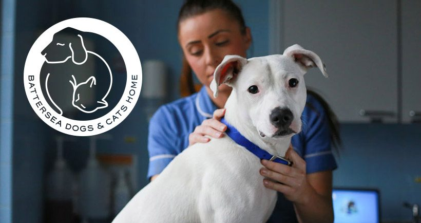 Fitting-out Battersea Dogs & Cats Home paw-fectly - read more